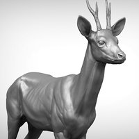 3D roe deer capreolus