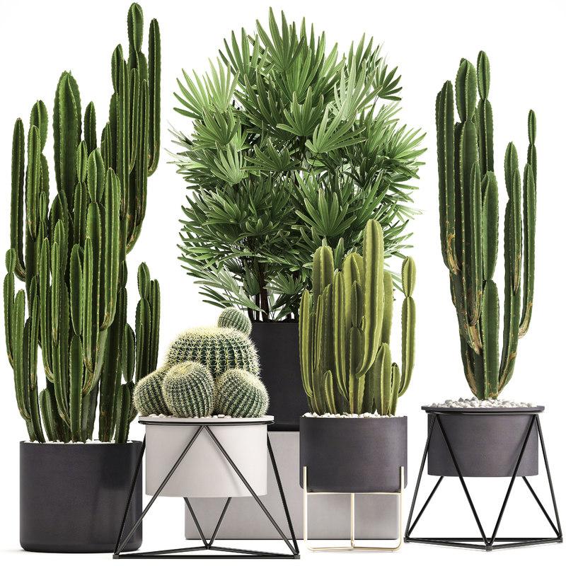 3D model plants exotic cactus