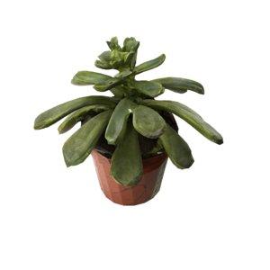 pot leaf 3D model