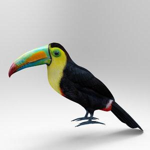 3D toucan keel billed