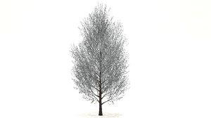 3D pyrus tree