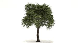 3D pseudo camellia tree model