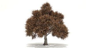 prunus tree 3D model