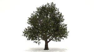 red oak tree 3D model