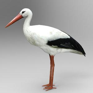 3D model stork bird