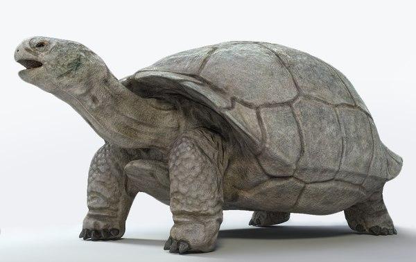 3D galapagos tortoise model