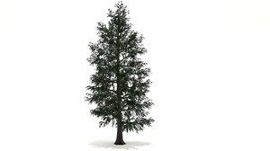 tilia tree 3D model