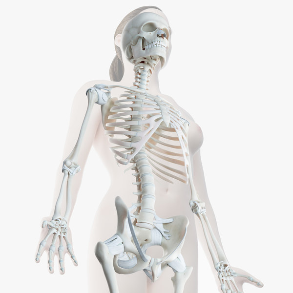 3D female skin skeleton rigged model