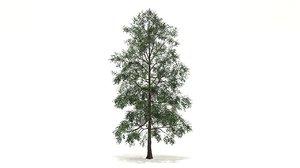 3D white birch tree