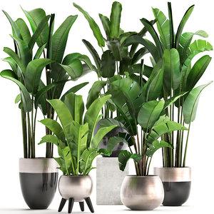 exotic plants banana tree 3D model