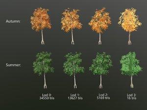 3D model aspen tree -