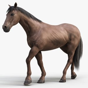 horse pro dark brown 3D model