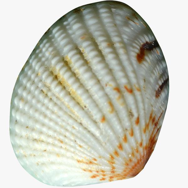 clam shell 3D model