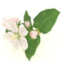 3D apple flower