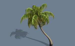 coconut palm tree looped model