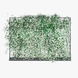 jasmine ivy plant 3D