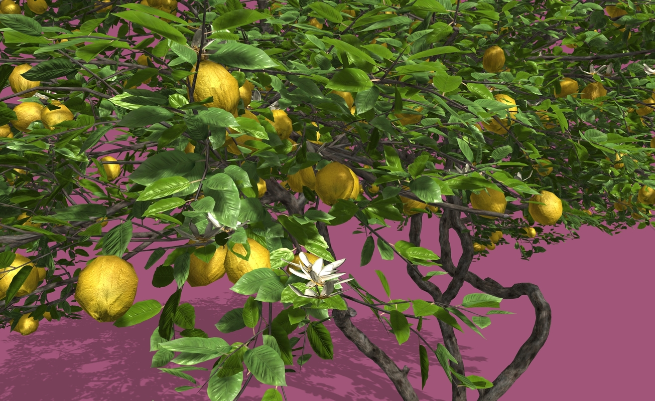 3D model lemon fruit tree