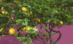 3D model lemon fruit tree