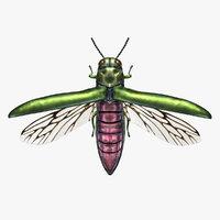 3D model beetle emerald ash borer
