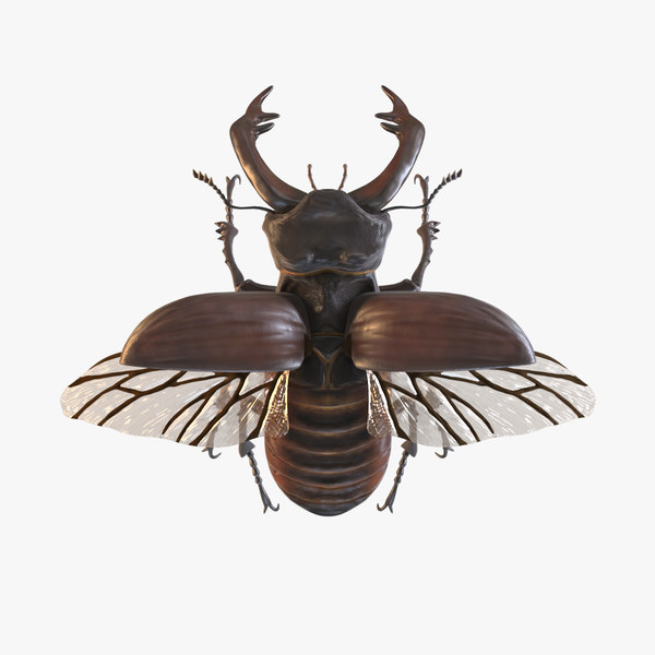 beetle stags insect 3D