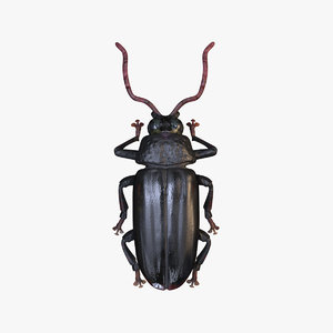woodcutter beetle 3D model