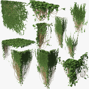 3D ivy p3 01