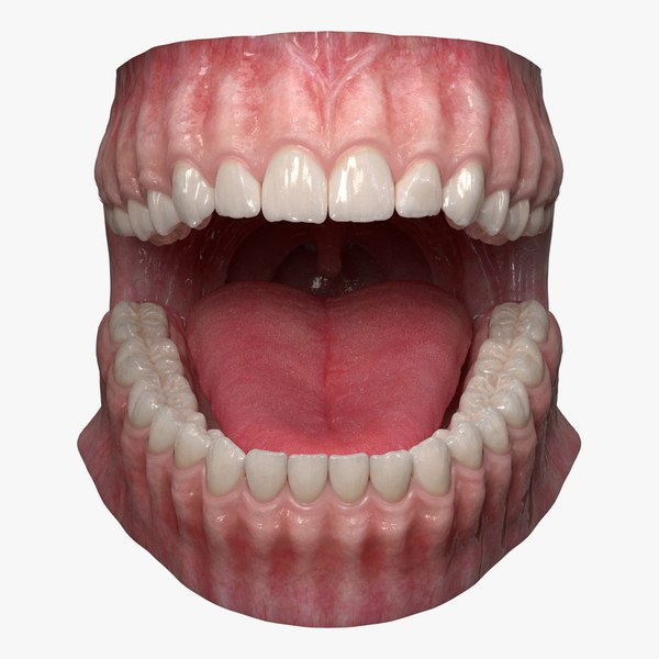 dentition teeth tongue gums 3D model