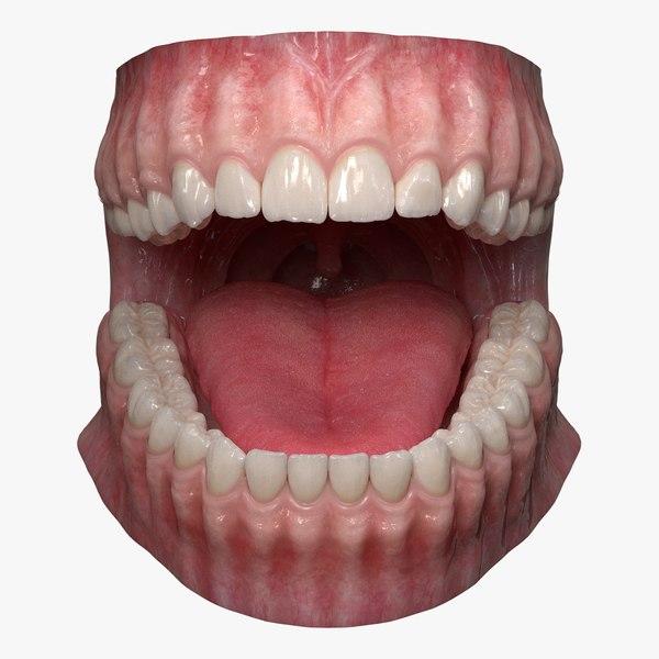 dentition teeth tongue gums 3D model