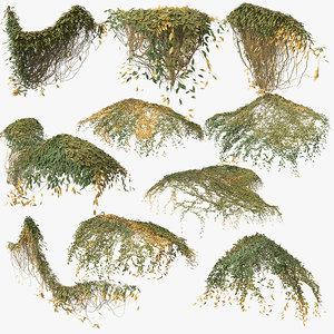 3D model ivy plant nature