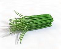 allium vegetable model