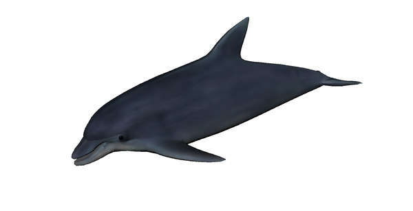 3D dolphin mammal animal model