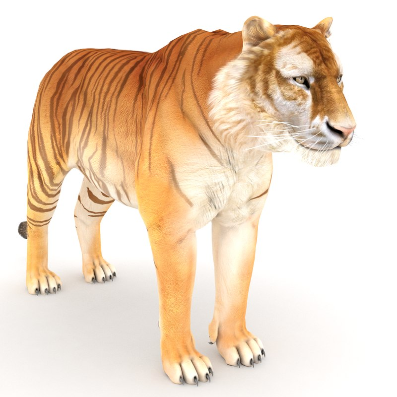 Golden Tiger Mount Key