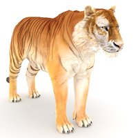 golden tiger 3D model