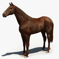 Horse_3d Model
