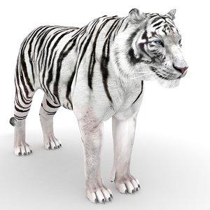 3D white tiger model