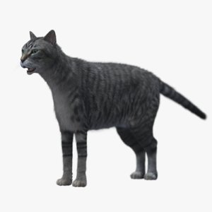 3D model cat mackerel tabby
