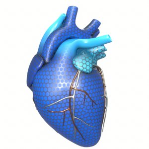 3D modeled human heart concept