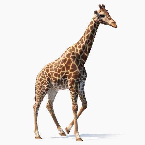 african giraffe walking pose 3D