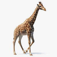 african giraffe walking pose 3D
