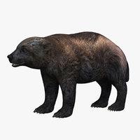 3D wolverine mammal fauna