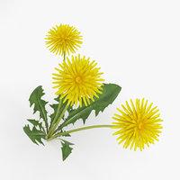 3D dandelion plant nature model