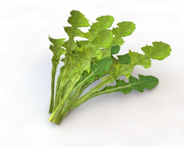 3D lettuce leaf