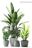plants 176