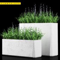 3D plant 179
