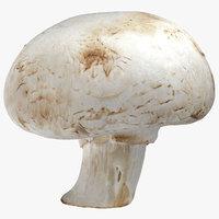 3D white button mushroom 04