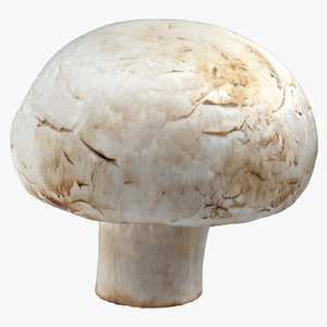 3D white button mushroom 05 model