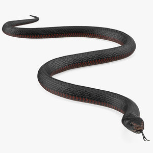 desert black king snake 3D