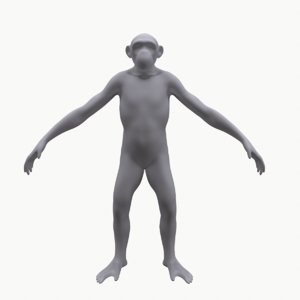base mesh primate 3D