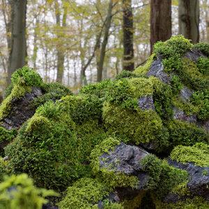 3D model moss 7 species stones