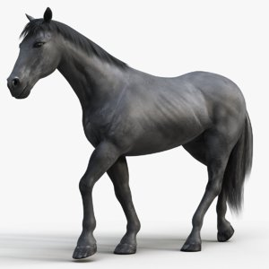 horse pro black animations 3D model